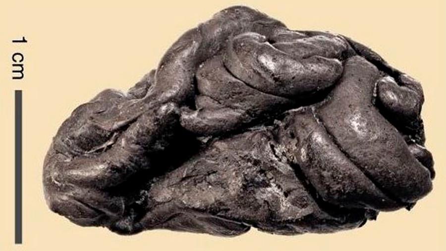 Un trozo de chicle prehistórico revela el ADN de su consumidor