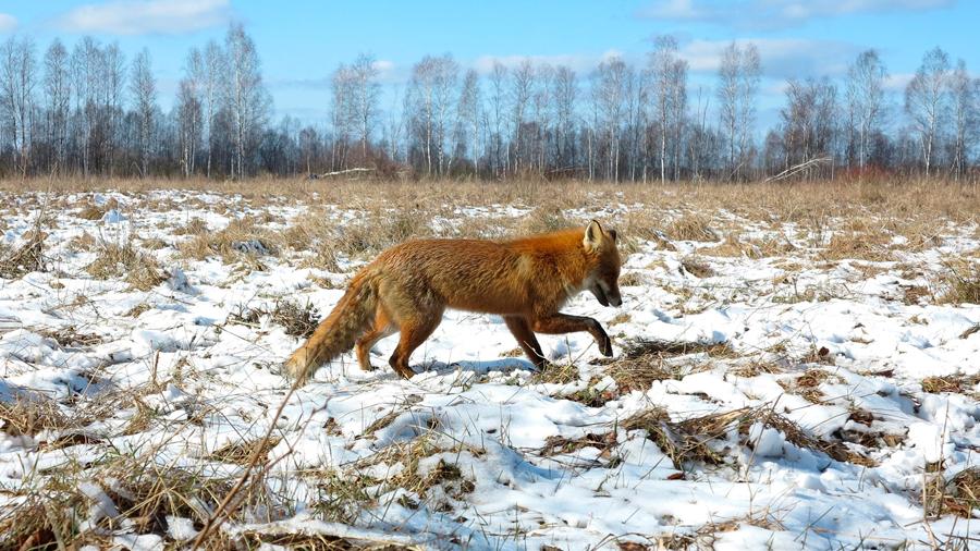 Lo más leído en 2019: La naturaleza recupera Chernobyl