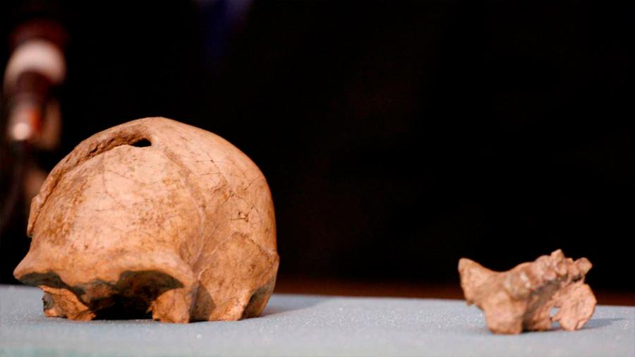 El último 'homo erectus' vivió en la isla de Java hace 108.000 años