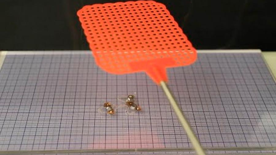 Pequeño micro-robot es puesto a prueba y soporta el golpe de un matamoscas