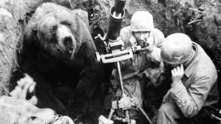 Un oso bebedor de cerveza fue alistado como soldado en la Segunda Guerra Mundial