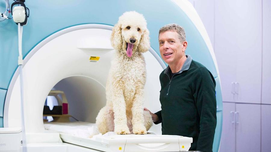 Los perros procesan números en una región cerebral similar a la humana