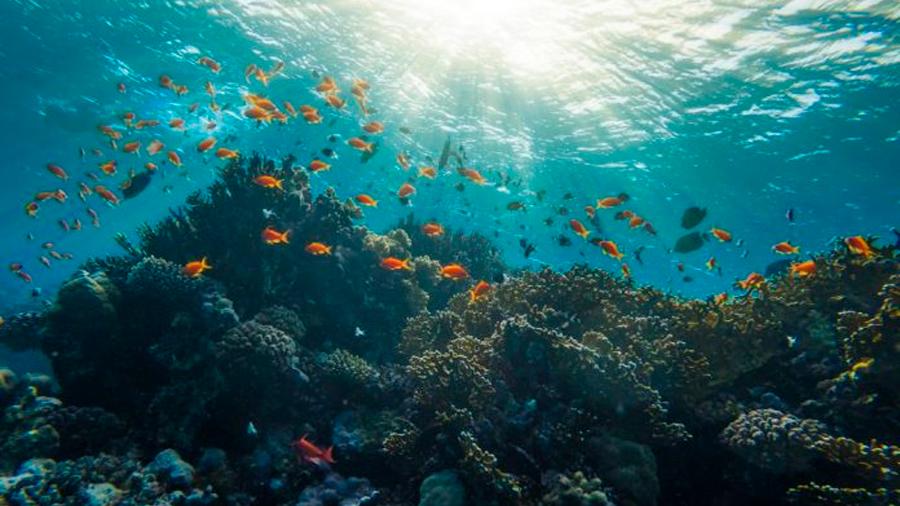 Para sobrevivir al cambio climático, especies marinas migrarán a aguas profundas