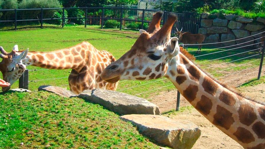 Más de 22,000 personas compran un zoo francés para liberar a sus animales