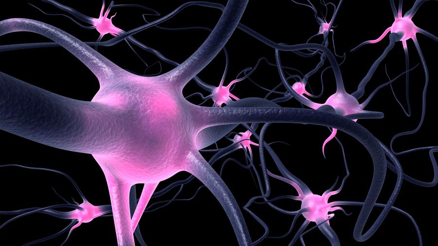 Identifican a las neuronas responsables de la fase del sueño REM
