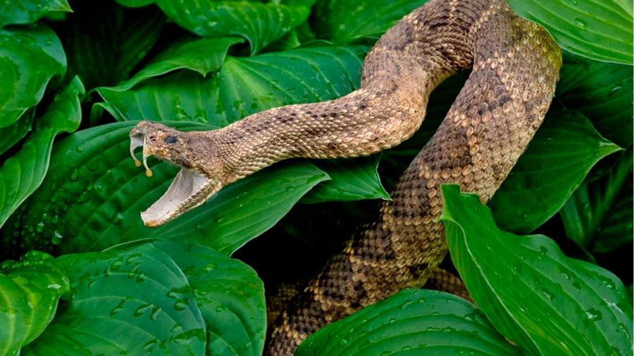 La biblia tenía razón: las serpientes tuvieron patas hace millones de años