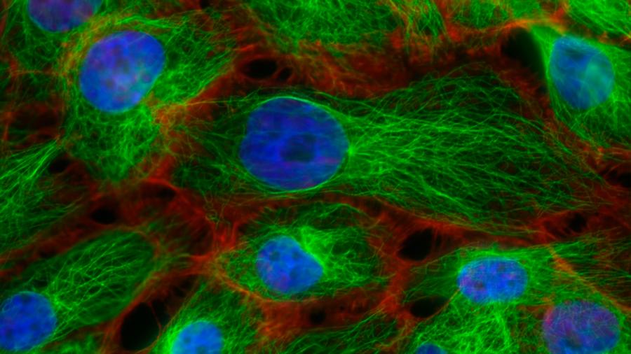 """Los científicos desarrollan un """"twitter"""" para las células"""