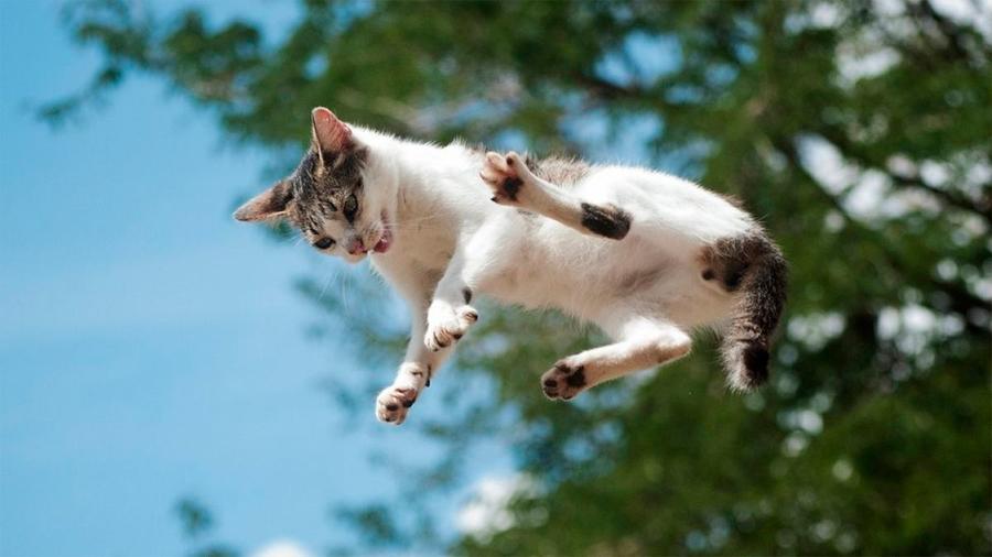 El inacabable misterio físico de por qué los gatos siempre caen de pie
