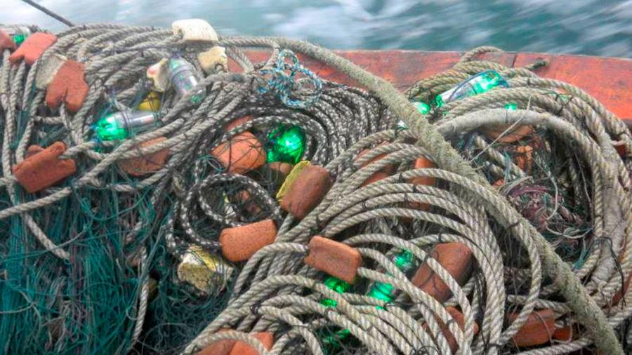 Luces LED para salvar tortugas y delfines de las redes de pesca