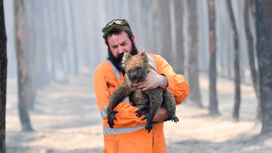 El infierno ecológico de Australia podría haberse cobrado ya la vida de mil millones de animales