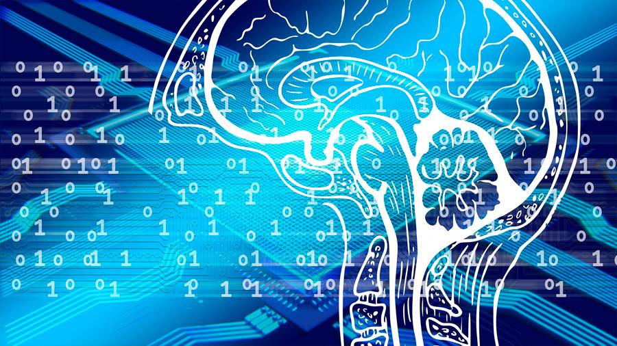 Descubren el mayor centro computacional del cerebro