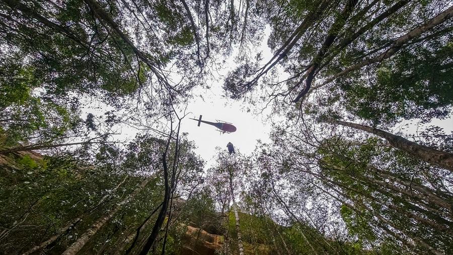 Una misión salvó a 'árboles dinosaurios' de los incendios en Australia