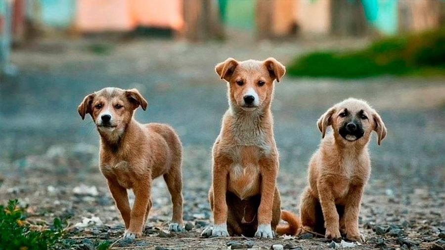 Los perros comprenden gestos humanos complejos de forma innata