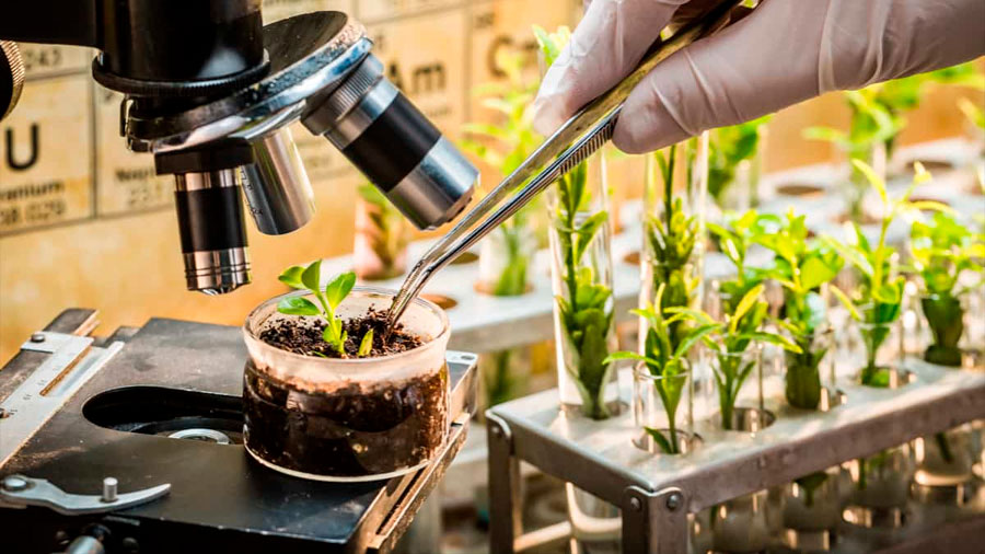 Descubren cómo una explosión de nuevos genes explica el origen de las plantas