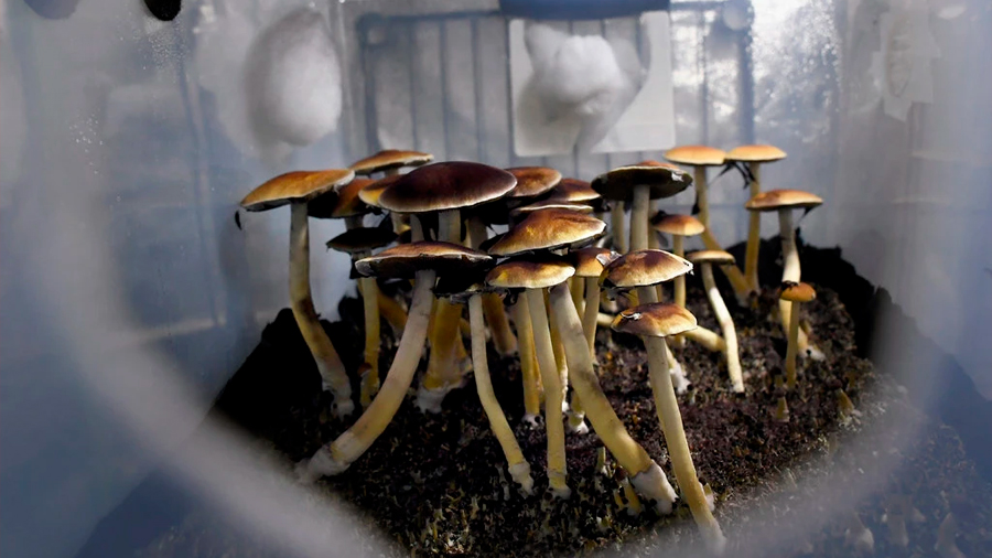 Científicos apuestan por las drogas psicodélicas para tratar problemas de salud mental