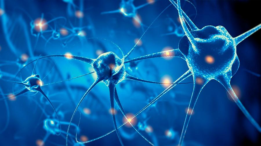 Descubren que una zona cerebral dañada de la memoria puede recuperarse produciendo nuevas neuronas