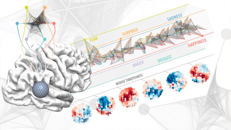 La experiencia emocional de una vida cabe en 3 centímetros de cerebro