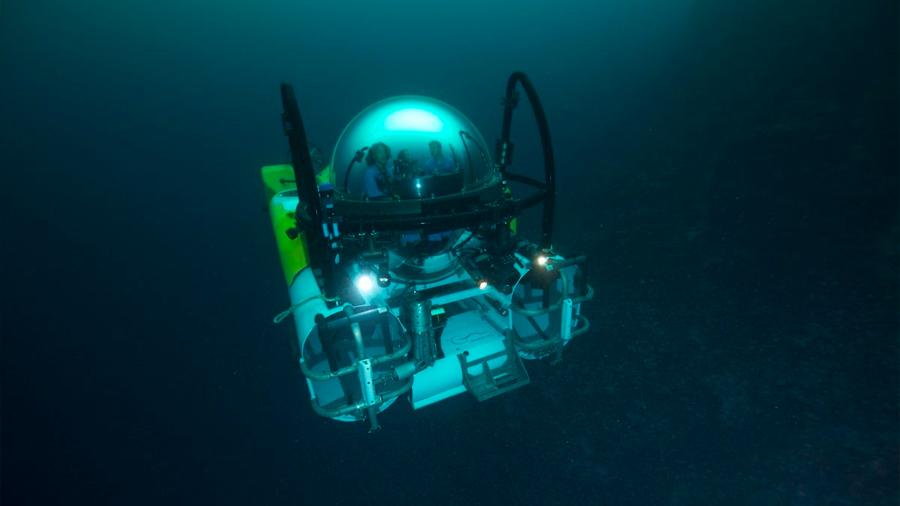Galápagos: descubren nuevas especies en las profundidades abismales del mar
