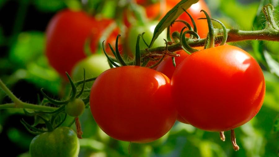 Científicos logran traducir los ultrasonidos que producen algunas plantas cuando se secan