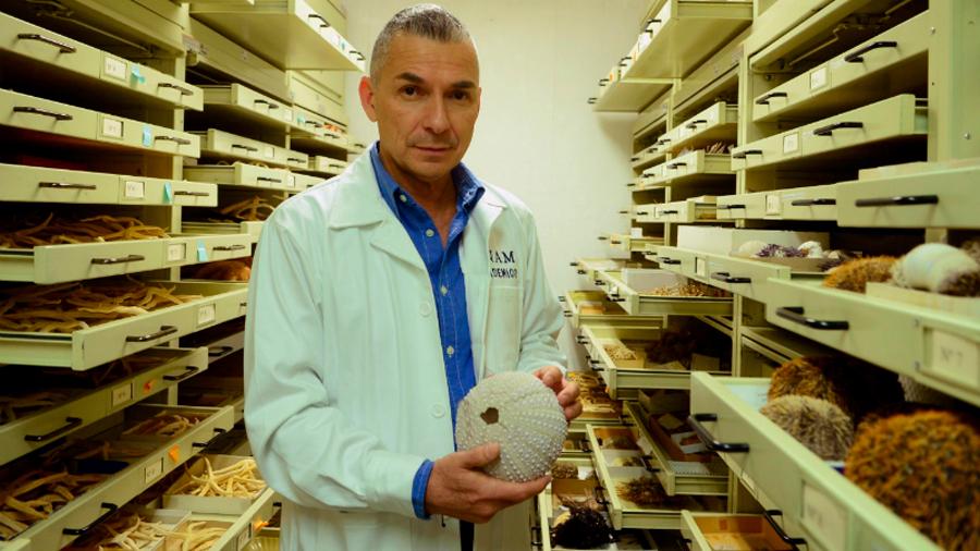 UNAM descubre nueva especie marina cavernícola en Cozumel; está en peligro de extinción