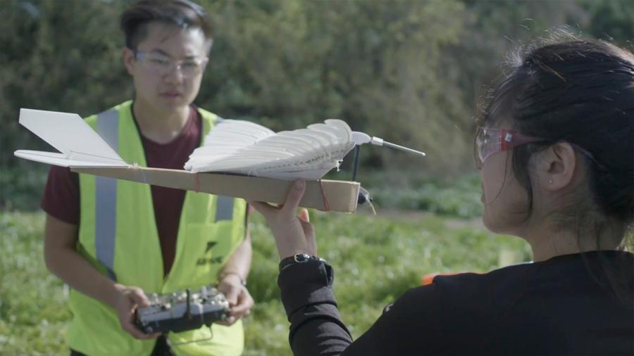 Un robot con plumas de paloma desvela claves del vuelo de las aves