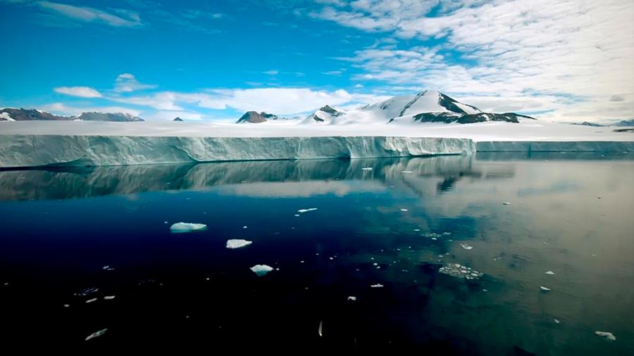 Identifican la primera especie invasora que llega a la Antártida sobre algas