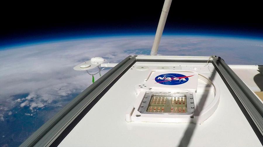 Esporas de moho resisten al 'ambiente marciano' de la estratosfera