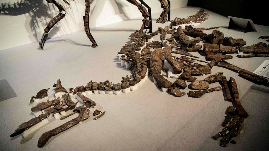 "Hallan en Alaska fósil intacto de ""raro"" ejemplar de dinosaurio"
