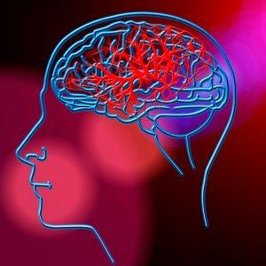 Las neuronas se reúnen para recuperar recuerdos