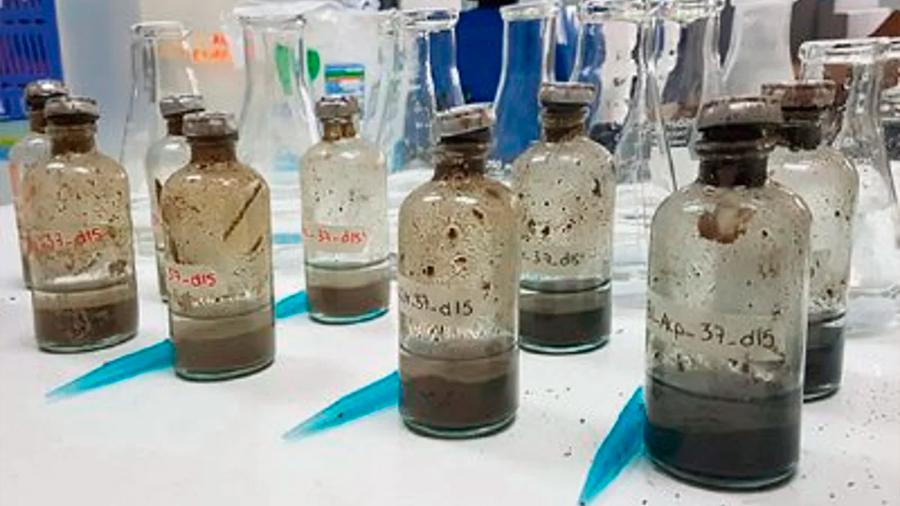 """Investigadores mexicanos cultivan bacterias que """"comen"""" petróleo y poder usarlas en caso de un gran derrame"""