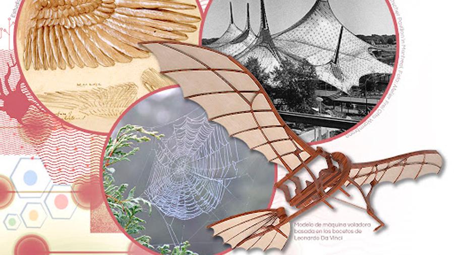 Biomimética: la ciencia de imitar a la naturaleza