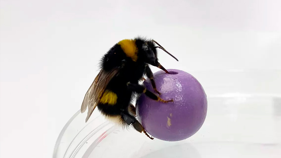 Un experimento revela que los abejorros aprenden a distinguir objetos por el tacto