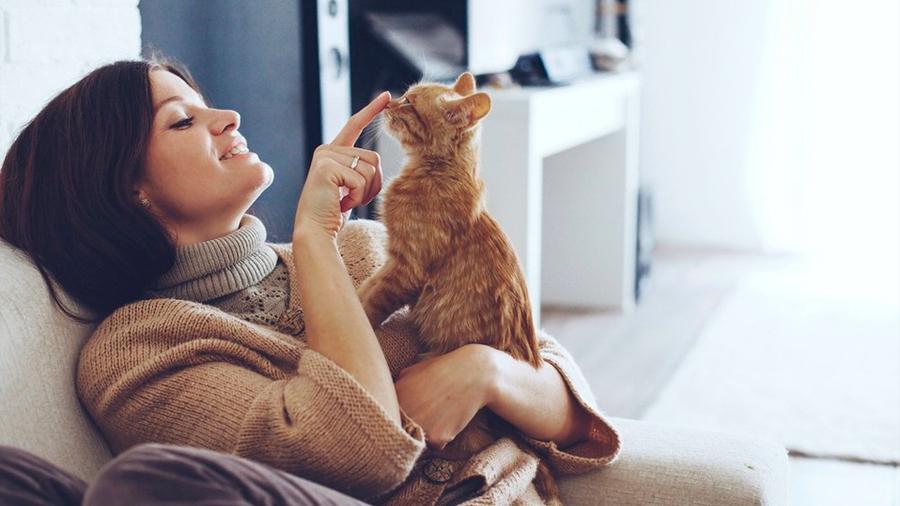 Los gatitos pueden reconocer su nombre, revela estudio