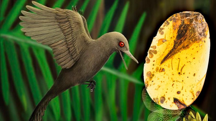 Un dinosaurio del tamaño de un colibrí resiste 99 millones de años en ámbar