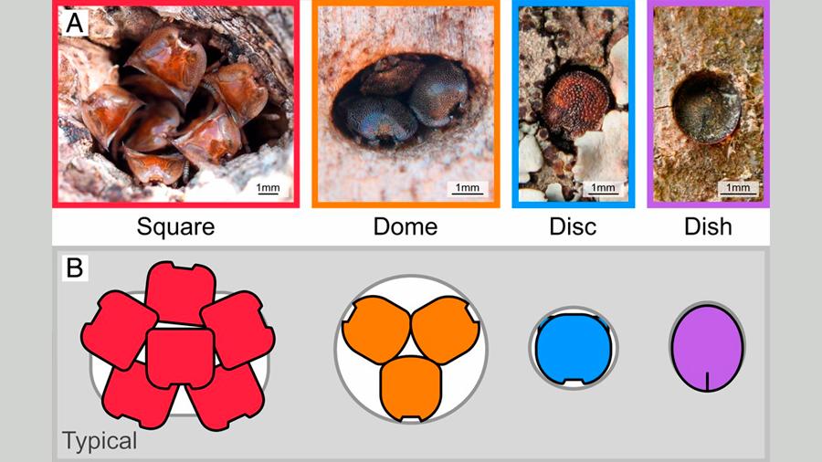 Hormigas tortugas demuestran que la evolución es reversible