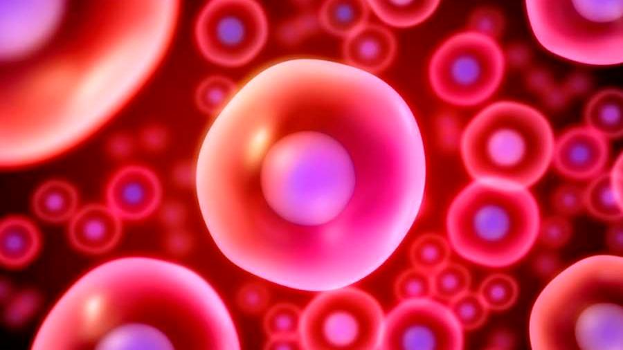Descubren una de las claves para generar células madre de la sangre en el laboratorio