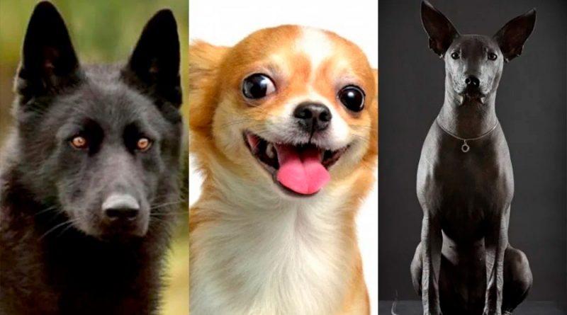 """Tres razas de perros """"hechas en México"""""""