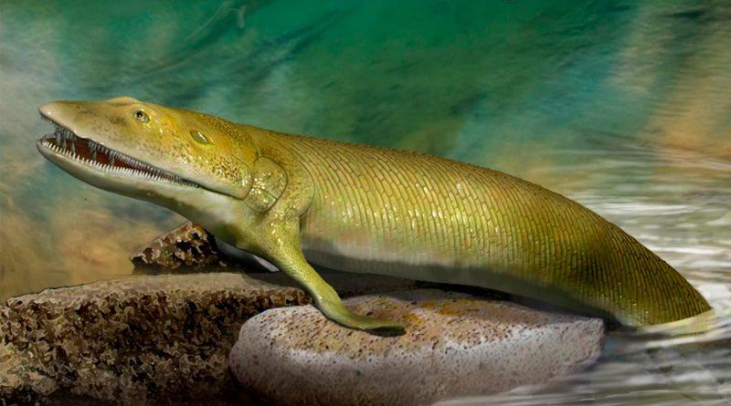 Aleta de pez, eslabón perdido sobre la evolución de la mano humana