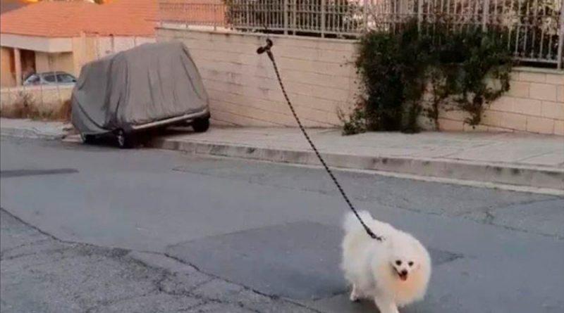 Hombre pasea a su perro con un drone por la cuarentena