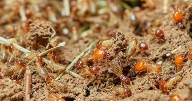 Las termitas inspiran la creación de barcos insumergibles