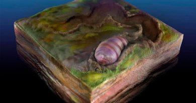 El ancestro de todos los animales, identificado en fósiles de Australia