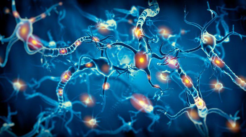 Reprograman células para cambiar patrones neuronales