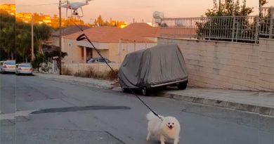 Mira a este dron pasear un perro en medio de la cuarentena por Covid-19
