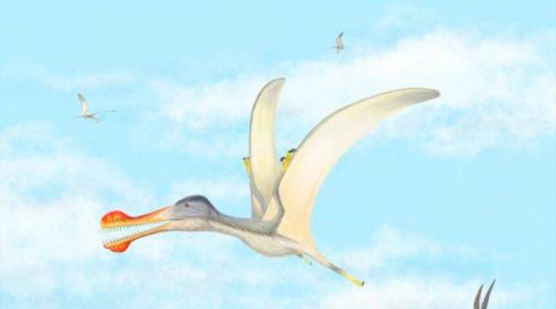 Reptiles voladores dominaron los cielos sobre el actual Sáhara