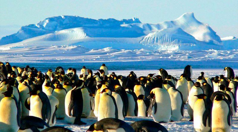 Las especies marinas aumentan sus poblaciones en los polos