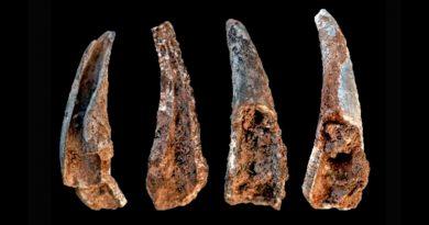Los neandertales comieron pescado, mejillones y hasta focas y delfines