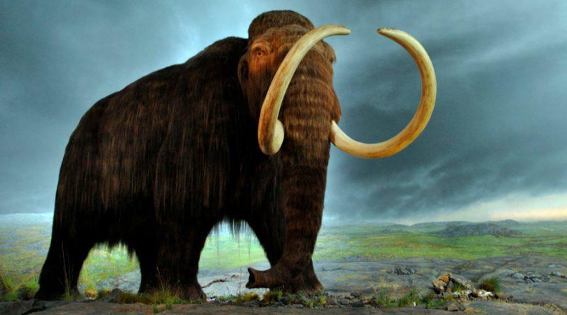Resucitar el mamut: ¿Puede hacerse? ¿Debe hacerse?