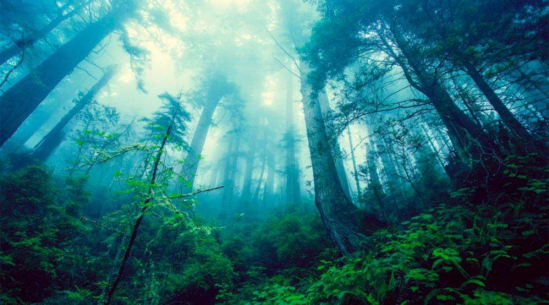 Ancestros humanos de dos millones de años aún trepaban a los árboles incluso cuando ya podían caminar