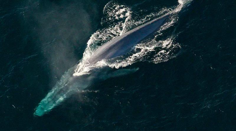 El gracioso momento en el que una ballena repele un dron con una ráfaga de mocos