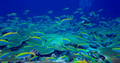 Subida de temperatura del mar provoca cambios en la abundancia de especies